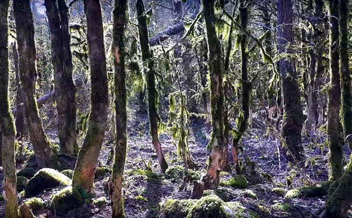 şimşir-ormanları rize fırtına vadisi
