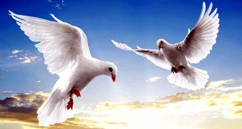 mardin-güvercinleri
