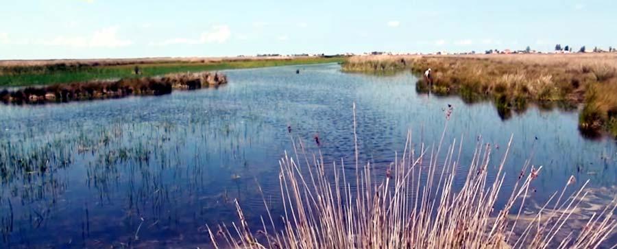 Bafra balık gölleri
