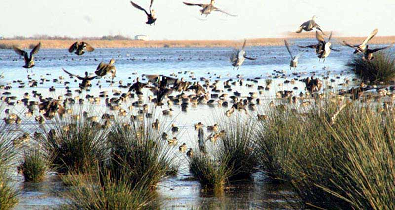 Bafra Kuş Cenneti, gezilecek yerler