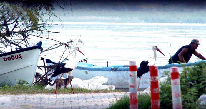 leylekler-gölyazı köyü, ulubat gölü