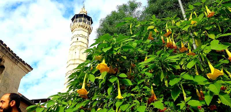 adana-ulu-cami, Adana gezilecek yerler