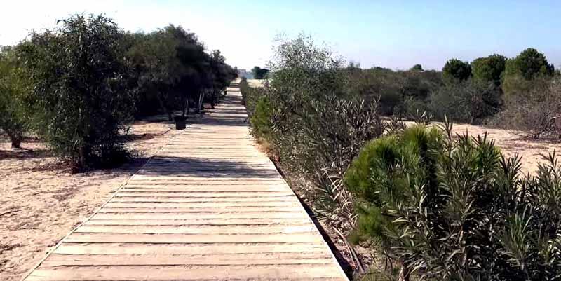patara-plajı-ahşap-yürüyüş-