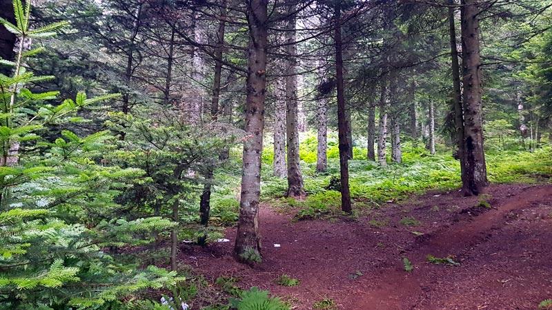 kartepe ormanları