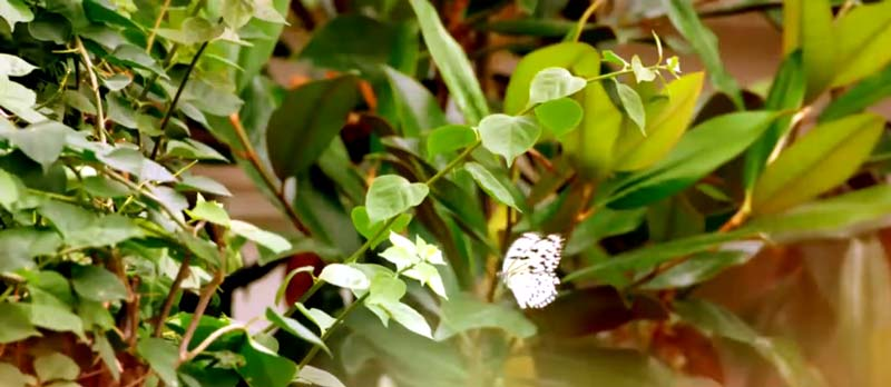 kelebek bahçesi konya gezilecek doğal yerler