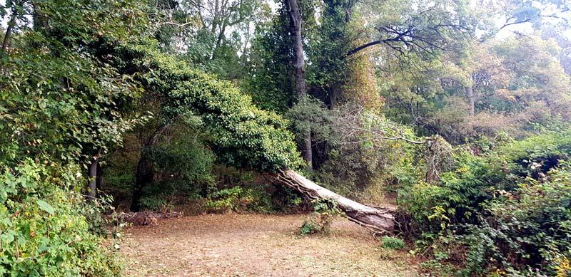 longoz ormanları nasıl bir yer