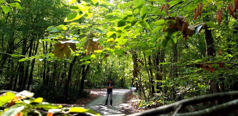 iğneada longoz ormanları nerede ve kamp alanları