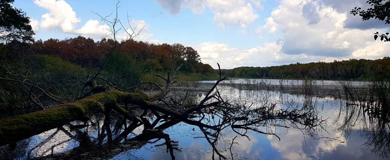 iğneada longoz ormanı hamam gölü